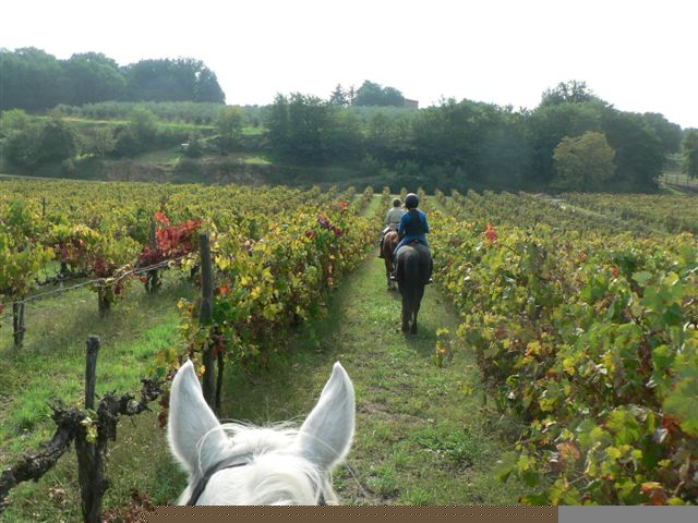 Riding through one of the many Chianti vineyards