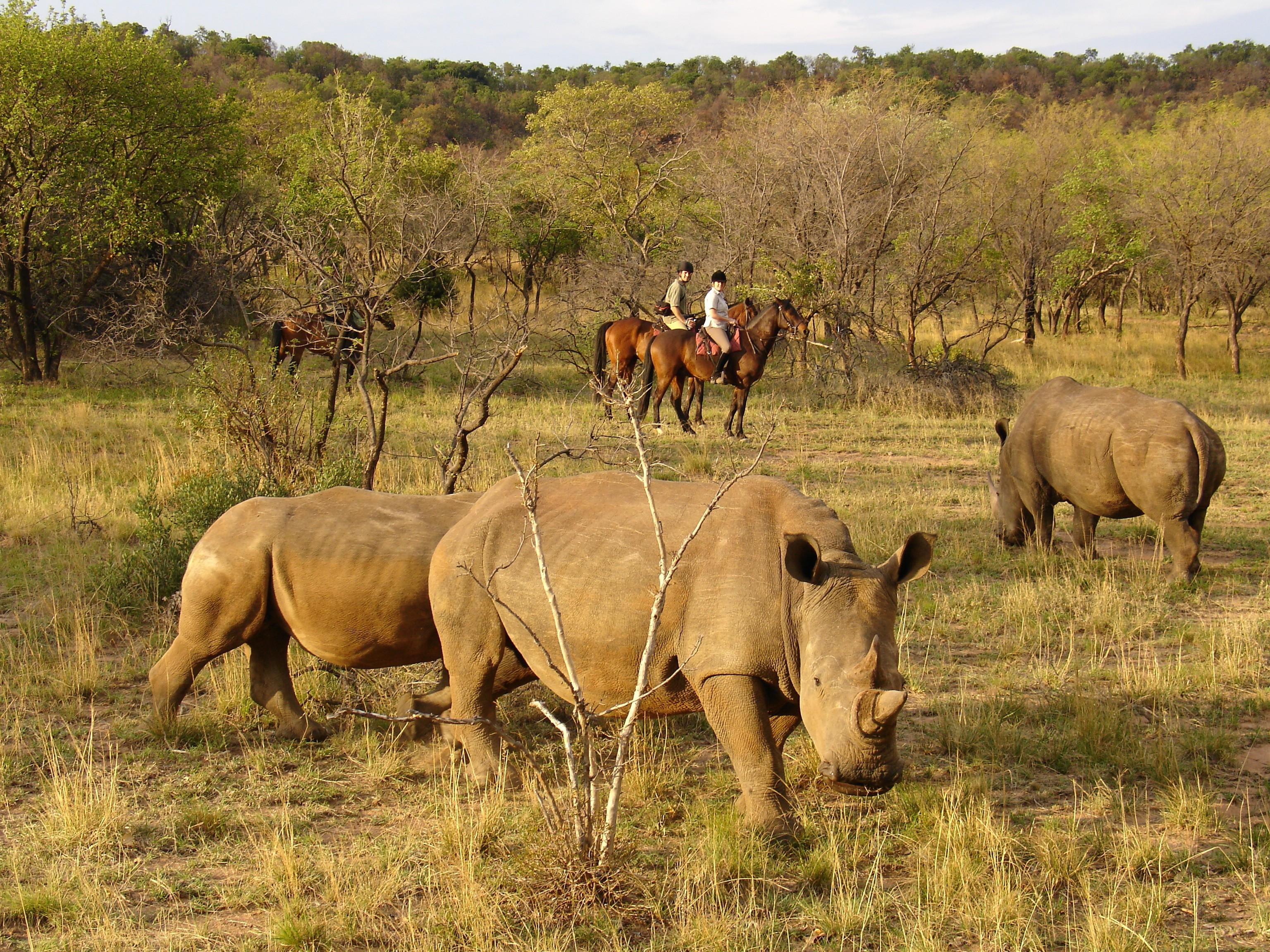 horse and rhino