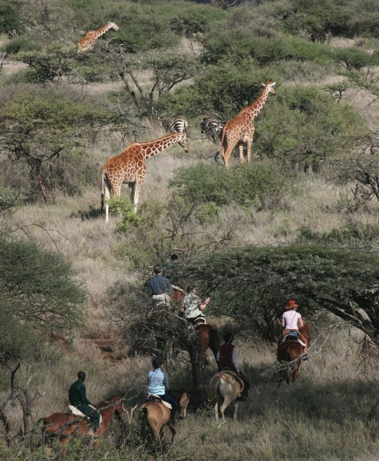 The Safari and Conservation Company - Borana 33