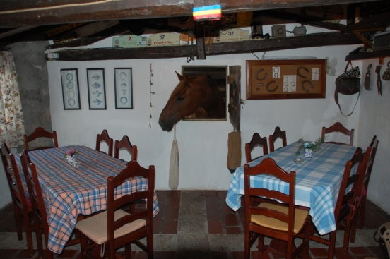 Vivaldi looking for his evening carrot in the dining room at Azores