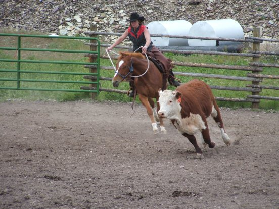 quarterhorse1