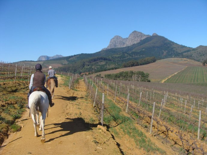Riding through the vines at Cape Winelands