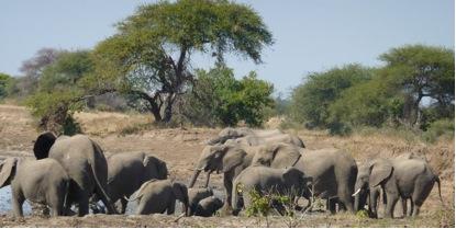We had fantastic wildlife sightings
