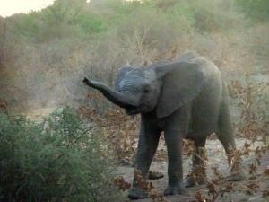 elephant - horseback safari in botswana