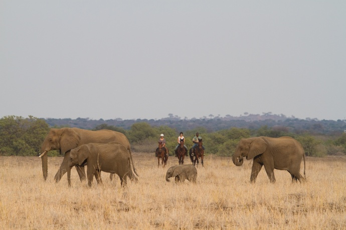 The Tuli Block is famous for spotting elephants