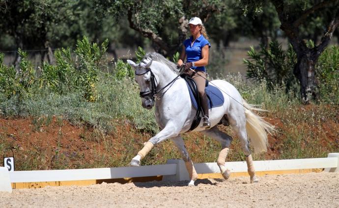 Improve your dressage or enjoy trail rides at Monte Vehlo