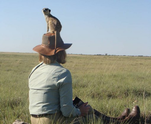Allow yourself to be enchanted by the meerkats at Makgadikgadi Pans