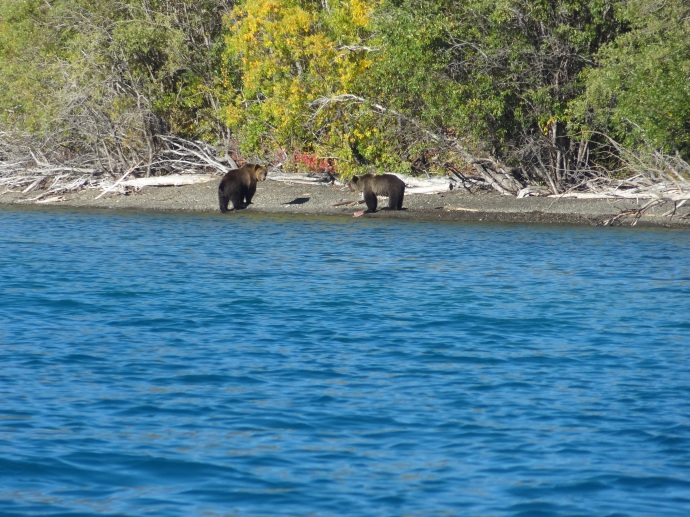 Mother and cub on Lake Chilko