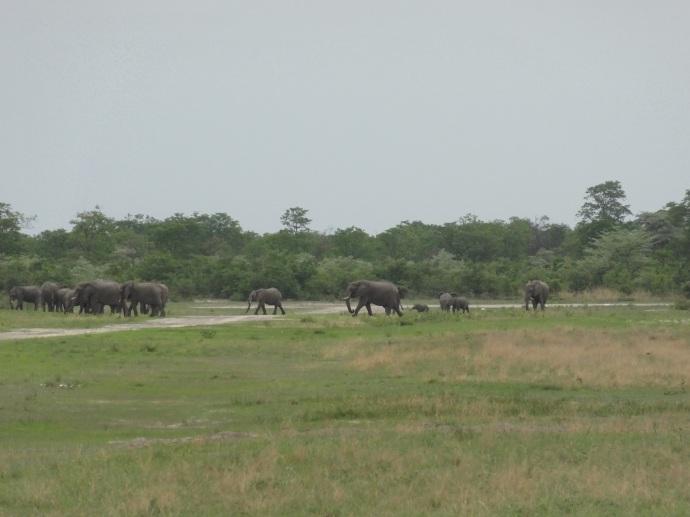Elephant on the runway at Motswiri