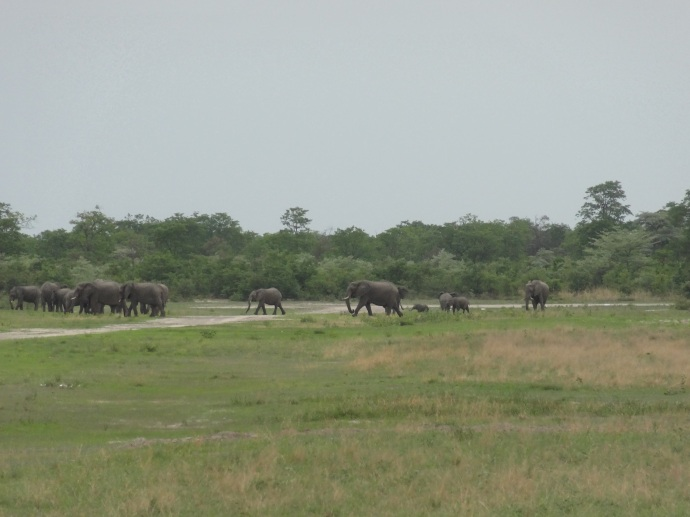 Elephant on the runway at Motswiri