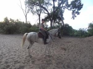 a very pretty safari horse at Macatoo