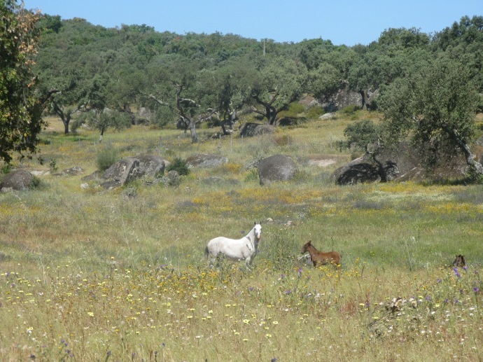 Mare and foal in the spring flowers.