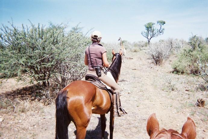 Rider & giraffe 03