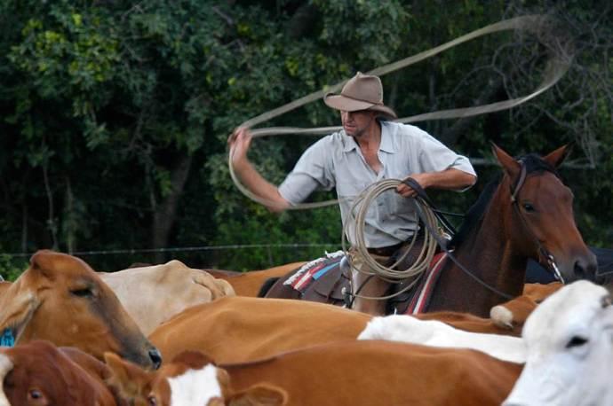 Shane & cows