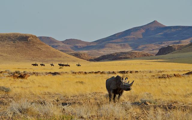DE horses and rhino