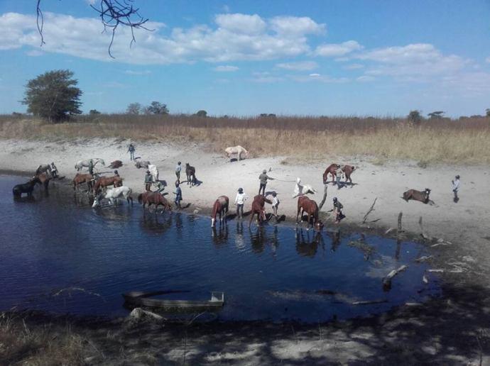 horses enjoying a cool off