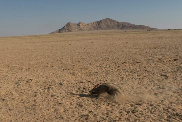 PIC 10 Aardvark